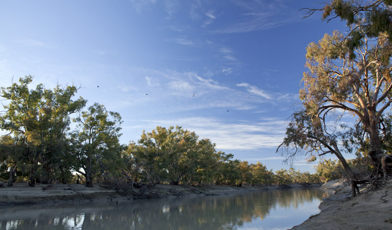 Darling River campground - Tourism TAS