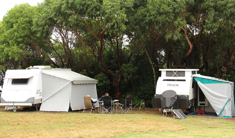 Pretty Beach campground - Murramarang National Park - Tourism TAS
