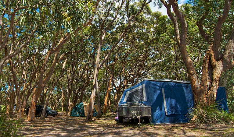 Stewart and Lloyds campground - Tourism TAS