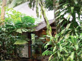 Heritage Lodge and Spa - In the Daintree - Tourism TAS