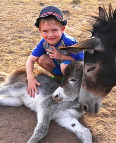 Destiny Boonah ECO Cottages and Donkey Farm - Tourism TAS