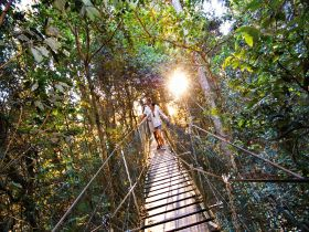 O'Reilly's Rainforest Retreat - Tourism TAS