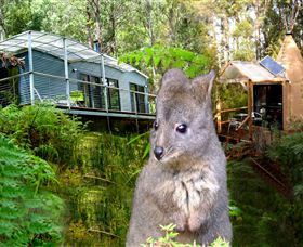 Huon Bush Retreats - Tourism TAS