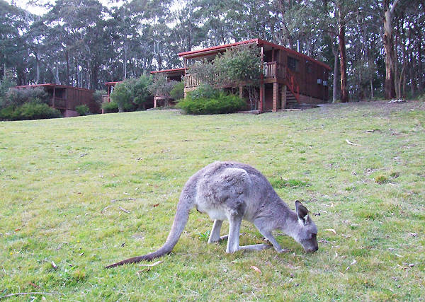 Jenolan Caves Cottages - Tourism TAS