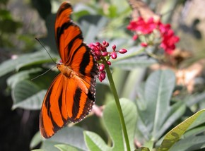 Butterfly Farm - Tourism TAS