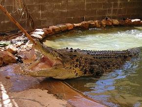 Wyndham Zoological Gardens and Crocodile Park - Tourism TAS