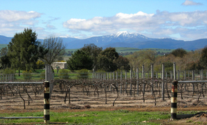 Buller View Wines - Tourism TAS