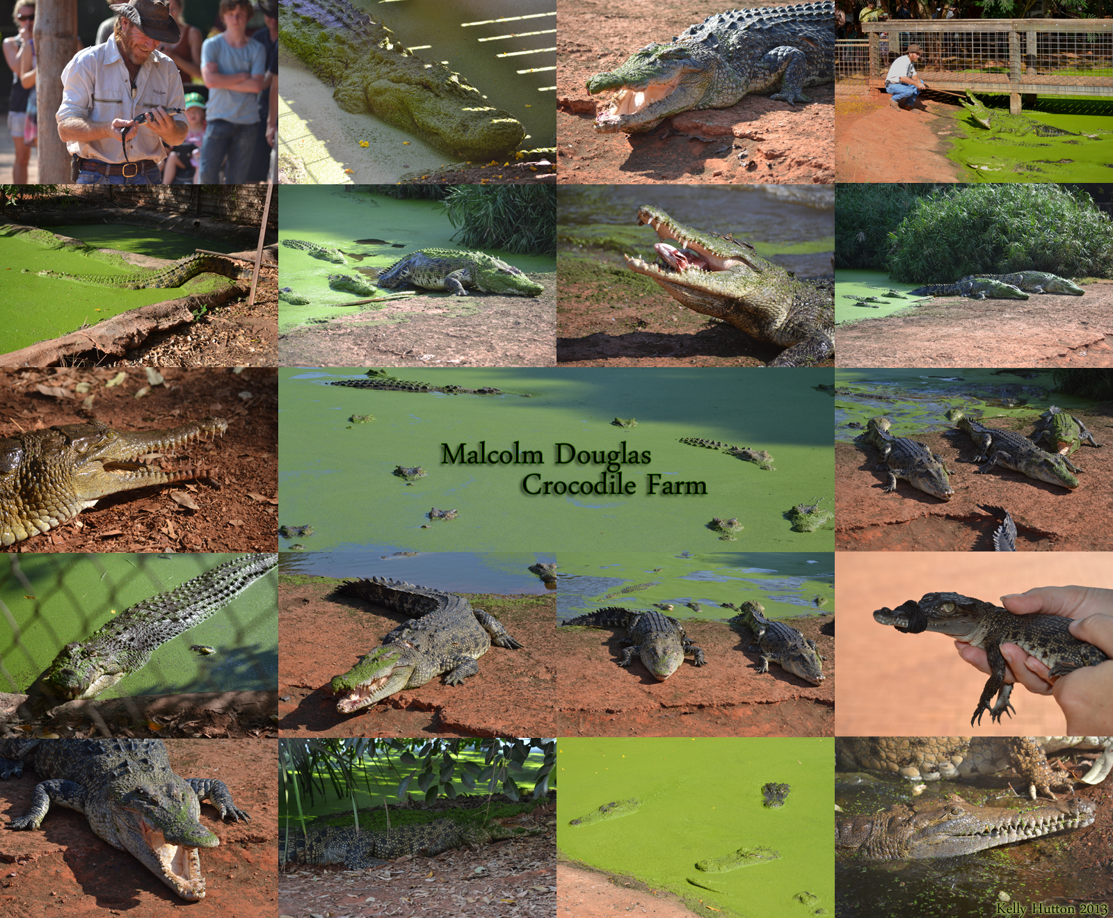 The Malcolm Douglas Crocodile Park - Tourism TAS