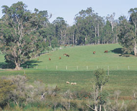 Scenic Drives - Bunbury Collie Donnybrook - Tourism TAS