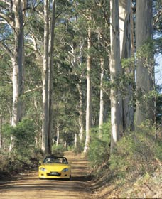 Mount Shadforth Scenic Drive - Tourism TAS