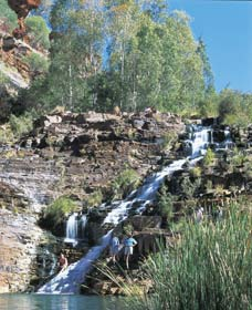 Fortescue Falls - Tourism TAS