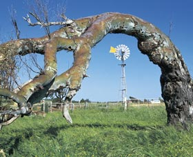 Greenough Leaning Trees - Tourism TAS