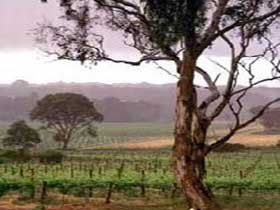 Yangarra Estate Vineyard - Tourism TAS