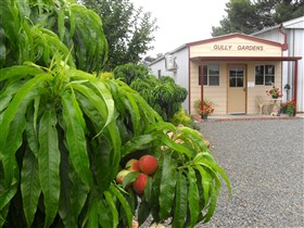 Gully Gardens - Tourism TAS