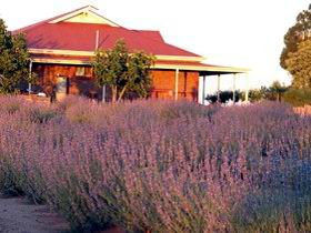 Bella Lavender Estate - Tourism TAS