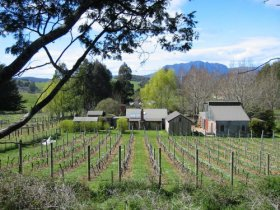 Wilmot Hills Vineyard - Tourism TAS