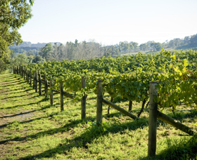 Surveyor's Hill Vineyards - Tourism TAS