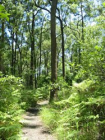 Mapleton Falls National Park - Tourism TAS