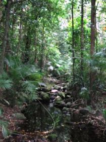 Mossman Gorge Rainforest Circuit Track, Daintree National Park