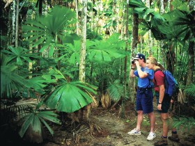 Mount Sorrow Ridge Trail Daintree National Park - Tourism TAS