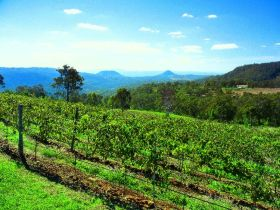 Preston Peak Wines - Tourism TAS