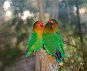 Ballarat Bird World - Tourism TAS