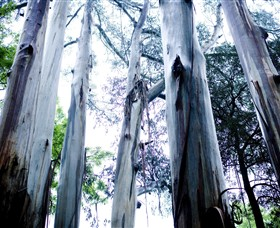Dandenong Ranges National Park - Tourism TAS