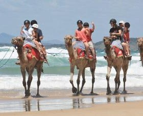 Camel Rides with Coffs Coast Camels - Tourism TAS
