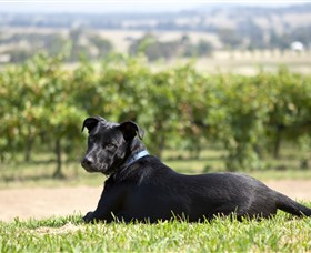 Moothi Estate Vineyard and Cellar Door - Tourism TAS