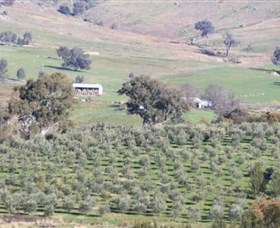 Wymah Organic Olives and Lambs - Tourism TAS