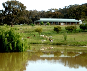 Clearview Alpacas - Tourism TAS