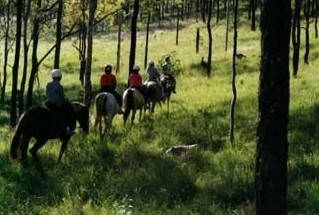 Hunter Valley Horse Riding and Adventures - Tourism TAS