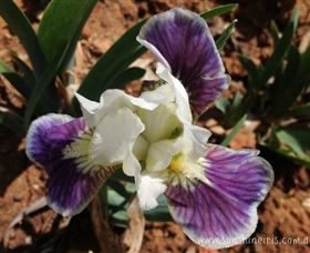 Sunshine Iris Nursery - Tourism TAS