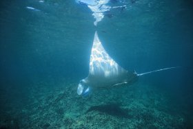 Manta Ray Bay Dive Site - Tourism TAS