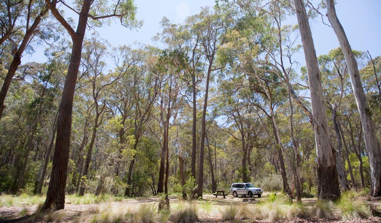 Coolah Tops National Park - Tourism TAS