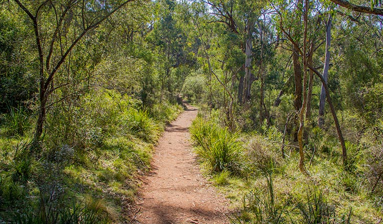 Mares Forest Creek walking track - Tourism TAS