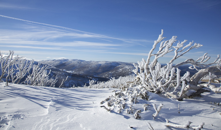 Rock Creek snowshoe track - Tourism TAS