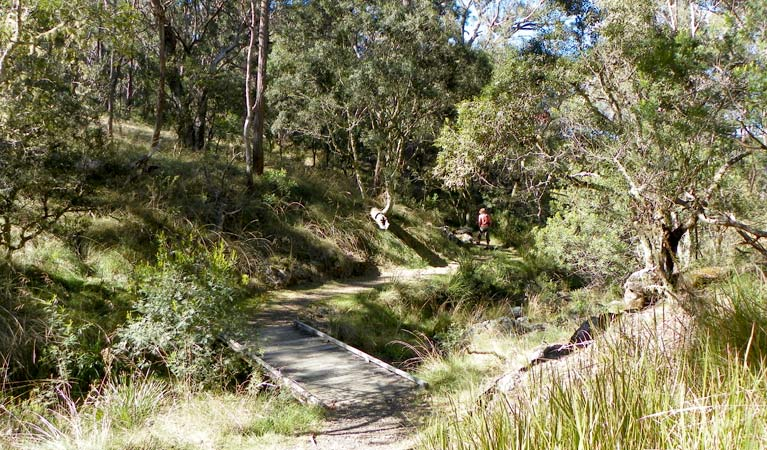 Wollomombi walking track - Tourism TAS