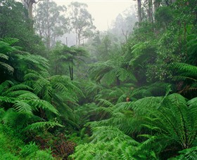 Tarra Bulga National Park - Tourism TAS