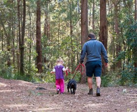 Olney State Forest - Watagan Mountains - Tourism TAS