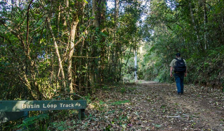 Basin Loop track - Tourism TAS
