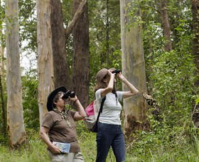 Chichester State Forest - Tourism TAS