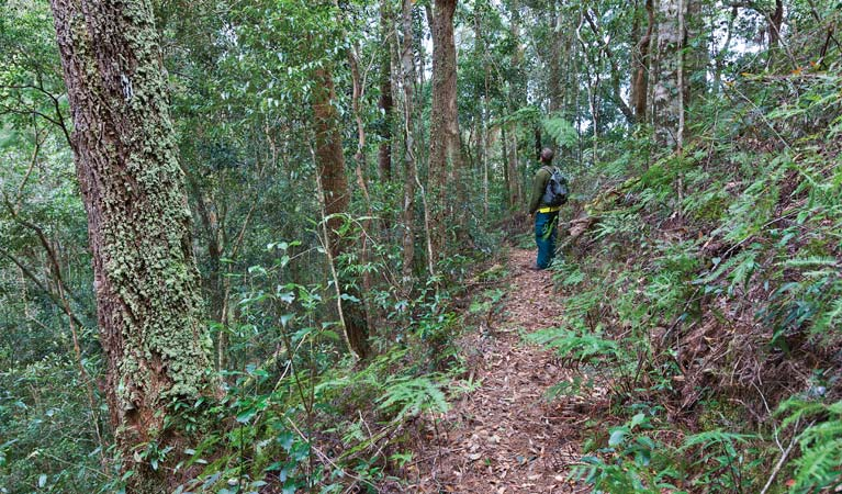 Blackbutt walking track - Tourism TAS
