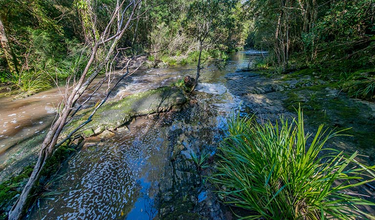 Dawson River walking track - Tourism TAS