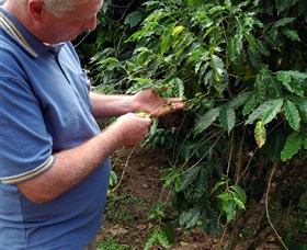 Wombah Coffee Plantation - Tourism TAS