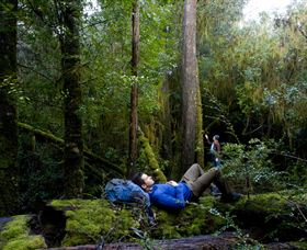 The Tarkine Drive - Tourism TAS