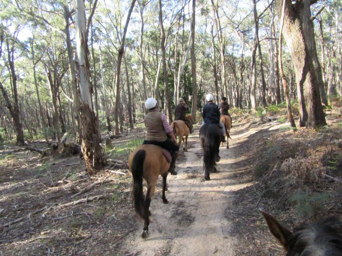 Silver Brumby Trails - Tourism TAS