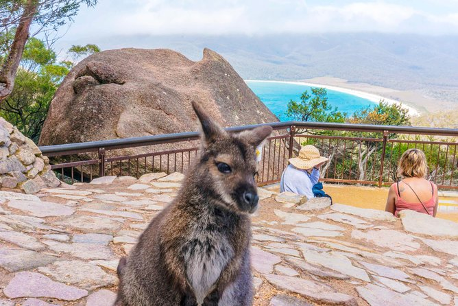 Wineglass Bay Discovery Tours - Full Day Tour from Hobart to Wineglass Bay - Tourism TAS