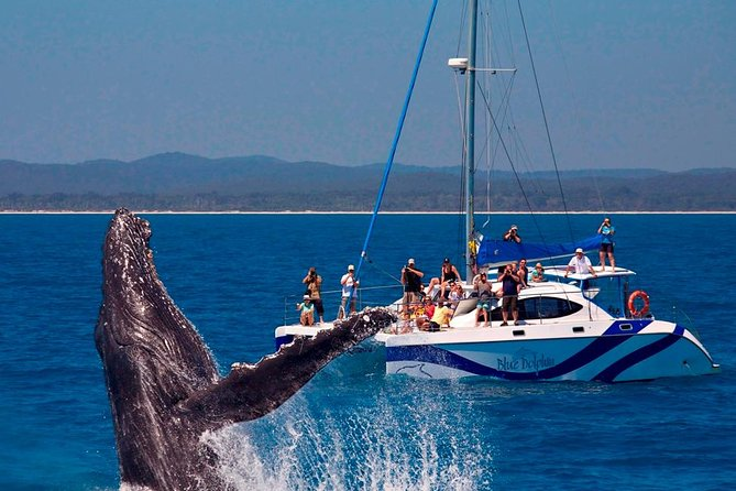 Blue Dolphin Small-Group Hervey Bay Whale Watching Cruise