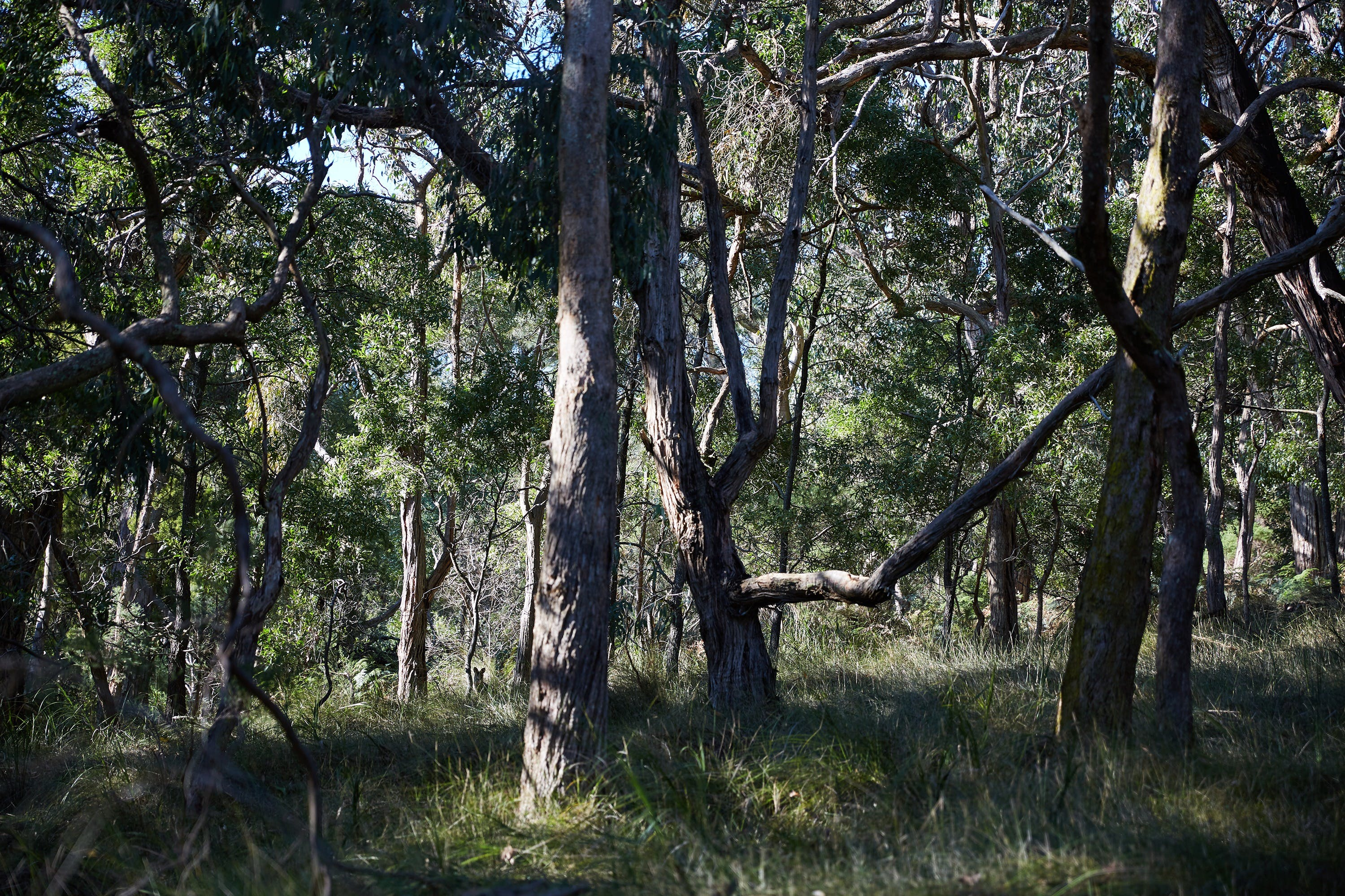 Green's Bush Long Circuit Walk - Tourism TAS
